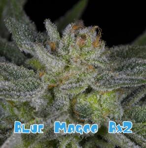 Blue magoo bx2a (1 of 1)-01